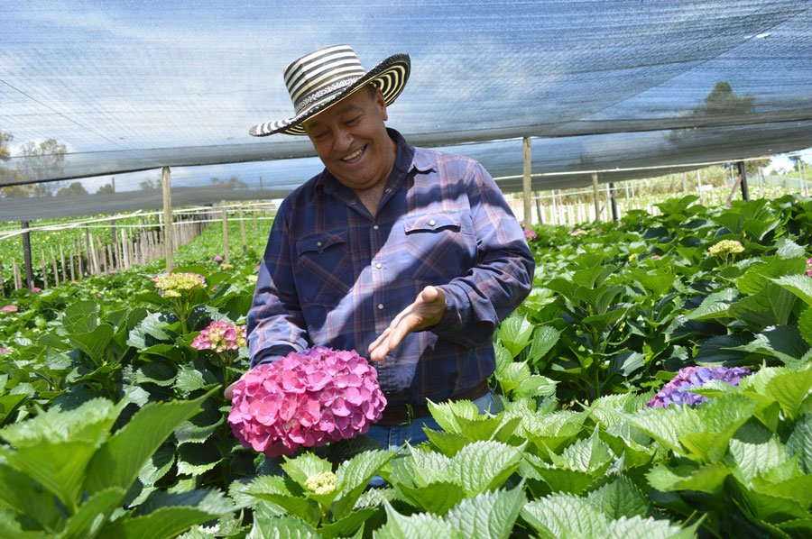 Monitoring and Control of quality of the flowers